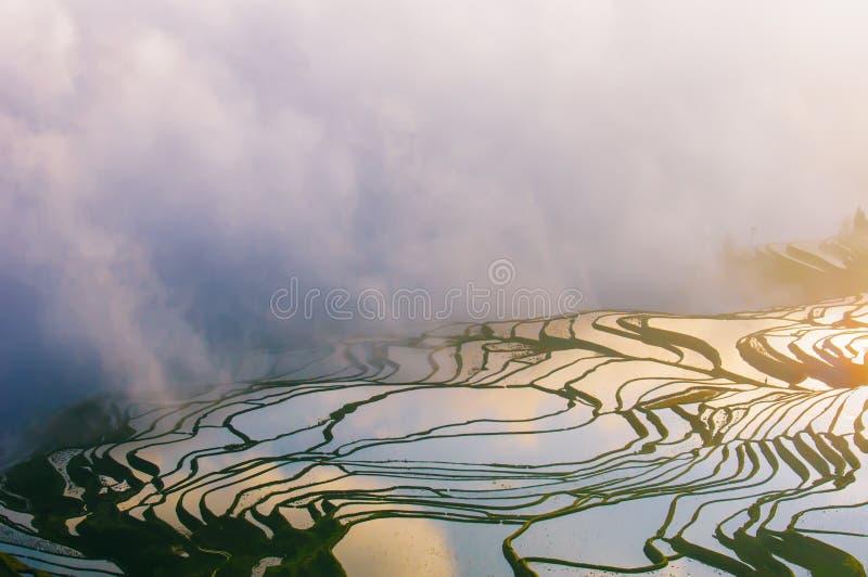 Campo a terrazze di Yuanyang all'alba immagine stock libera da diritti