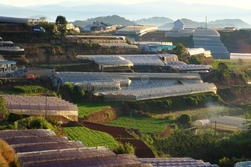 Campo a terrazze a zona agricola del Lat del Da fotografia stock