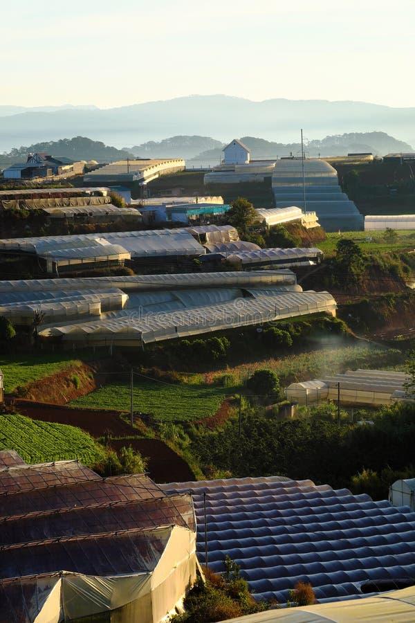 Campo a terrazze a zona agricola del Lat del Da immagine stock libera da diritti