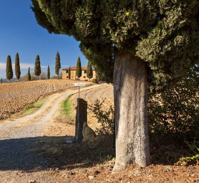Campo toscano cerca de Pienza, Toscana, Italia fotografía de archivo