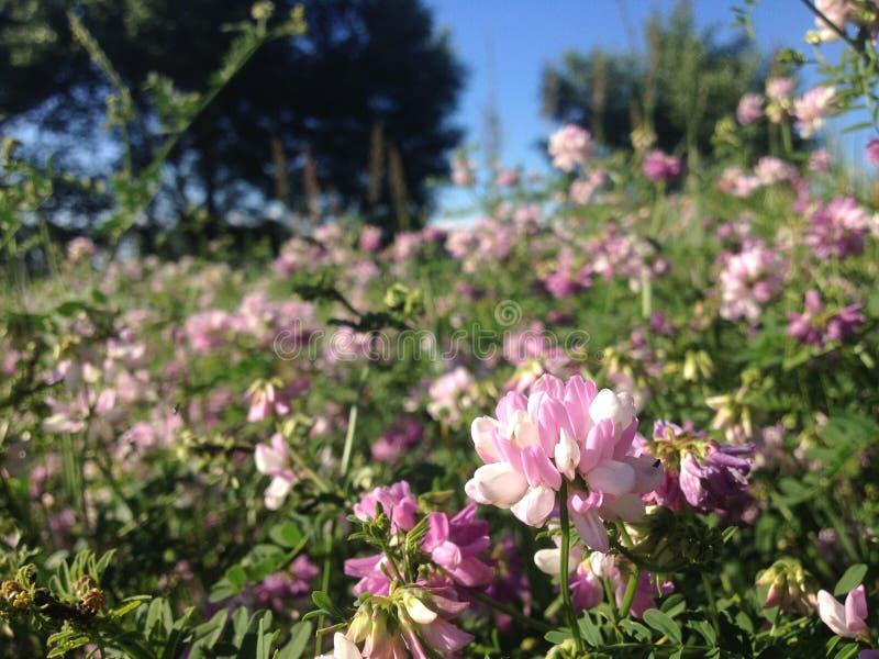 Campo ucraino con i bei wildflowers fotografie stock libere da diritti