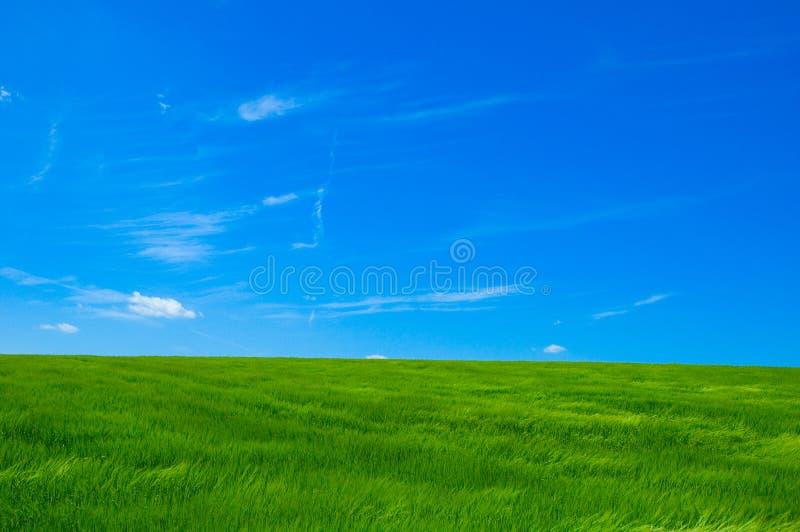Campo verde 1 imagens de stock