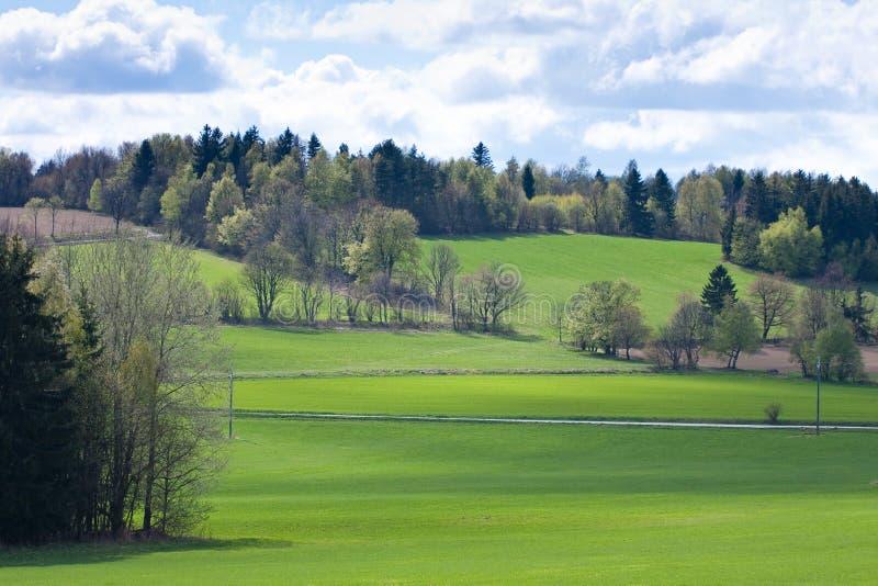 Campo verde imagem de stock royalty free