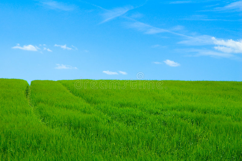 Campo verde 2 fotografia stock