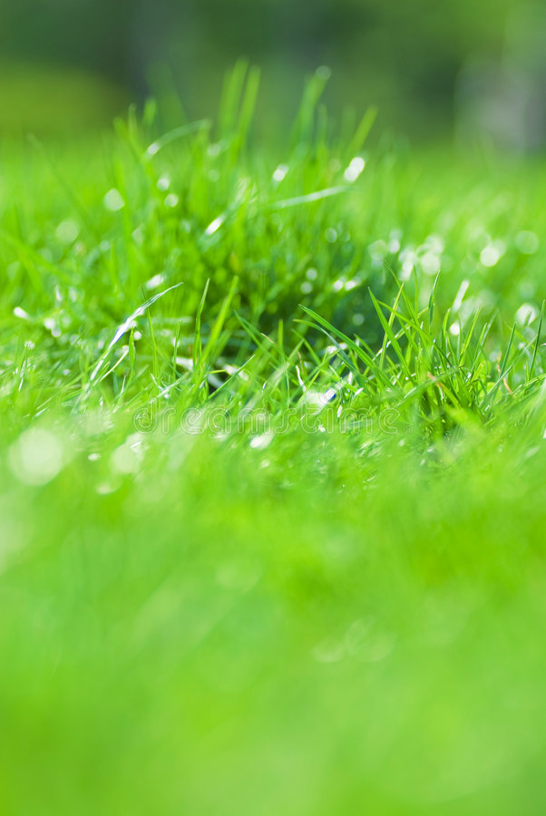 Campo verde fotos de stock royalty free