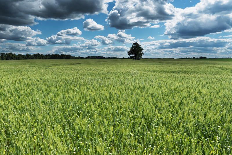 Download Campo verde foto de archivo. Imagen de nube, granja, campo - 64207152