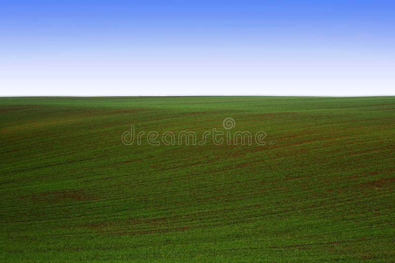 Download Campo verde foto de archivo. Imagen de asoleado, planta - 7288624