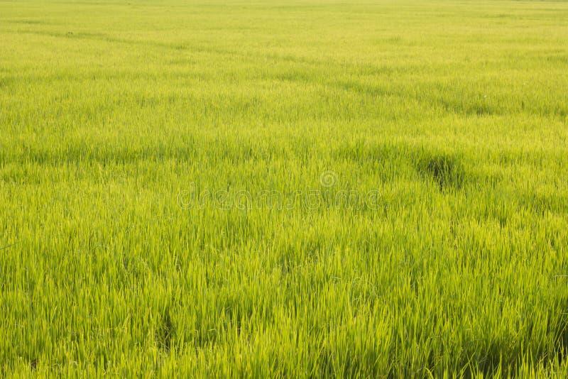 Campo verde al paese fotografia stock