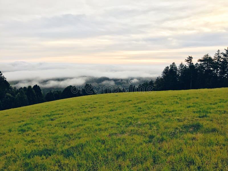 Campo verde bonito com surpresa do céu nebuloso e de uma floresta no fundo fotografia de stock royalty free