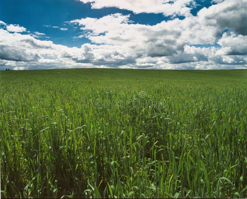 Campo verde che entra in cielo blu fotografie stock libere da diritti