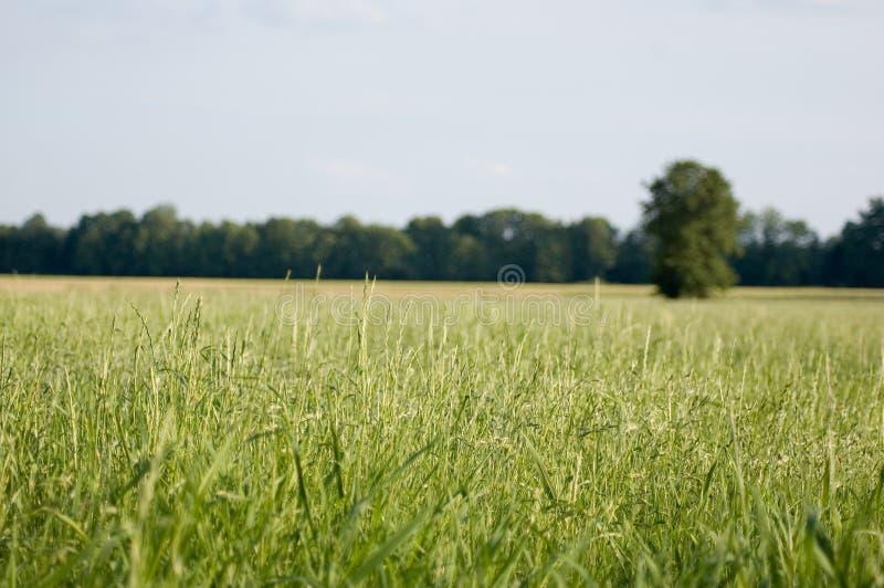 Campo verde, cielo azul imagen de archivo libre de regalías