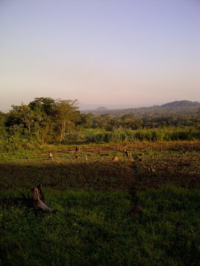 Campo verde, cielo azul fotografía de archivo