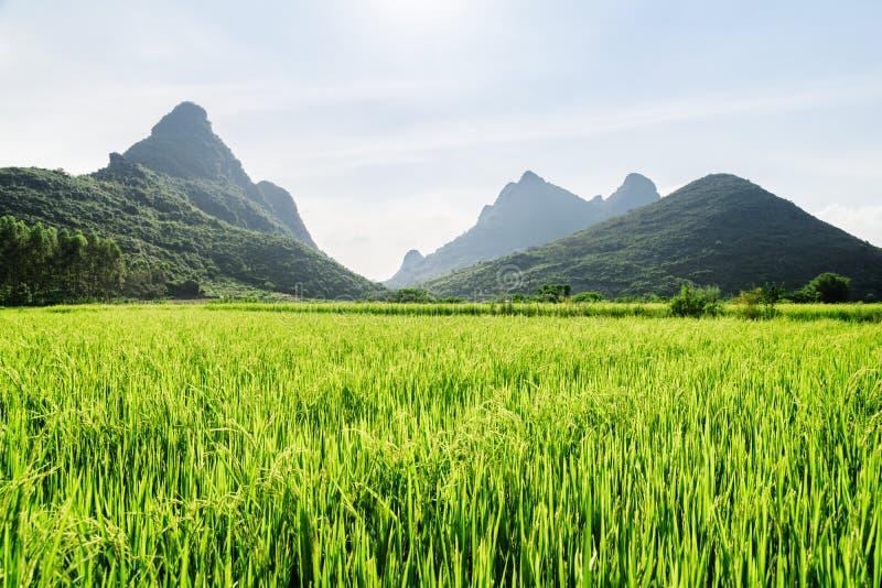 Campo verde-claro de surpresa do arroz e montanhas cênicos do cársico imagens de stock