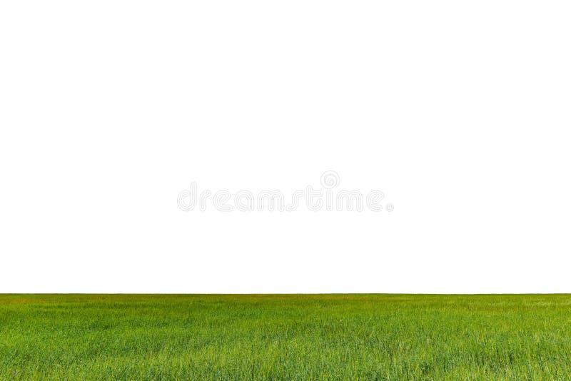 Campo verde com centeio fotos de stock