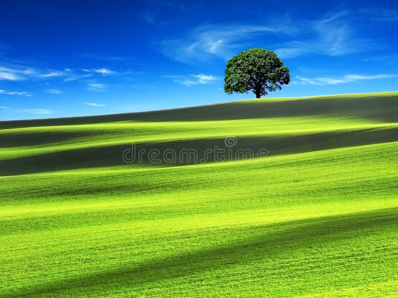 Campo verde com o céu azul imagem de stock
