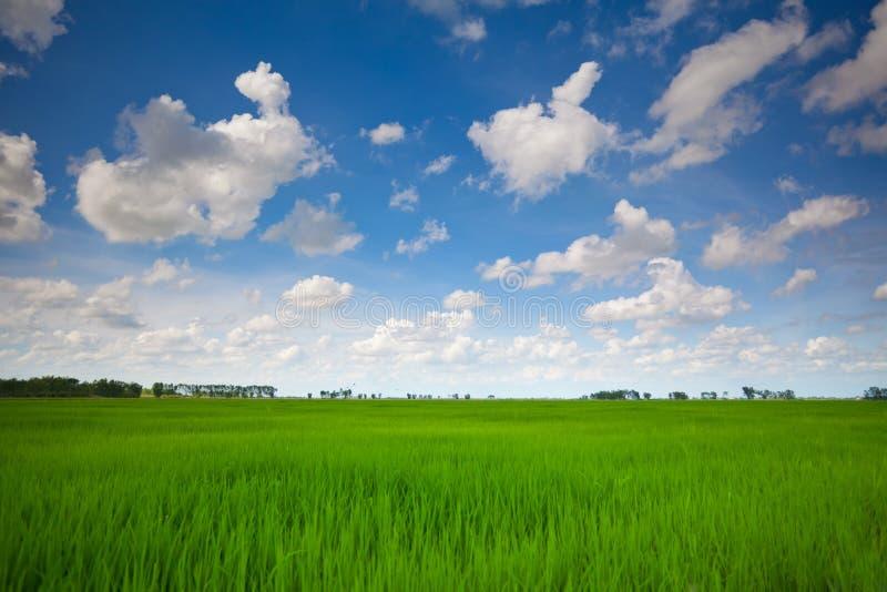 Campo verde con el cielo azul imagen de archivo