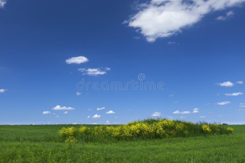Campo verde con el cielo azul foto de archivo