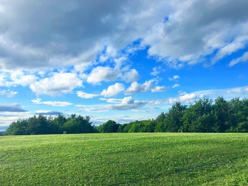 Campo verde con el cielo azul imágenes de archivo libres de regalías