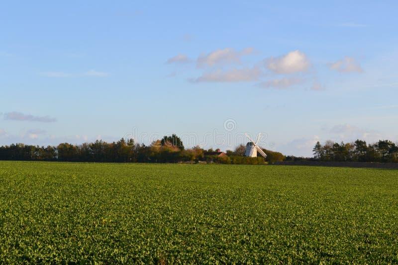 Campo verde con el molino de viento en fondo fotos de archivo libres de regalías