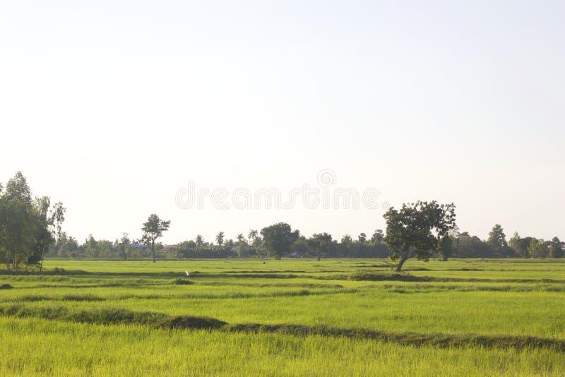 Campo verde con gli alberi ed il cielo blu immagini stock