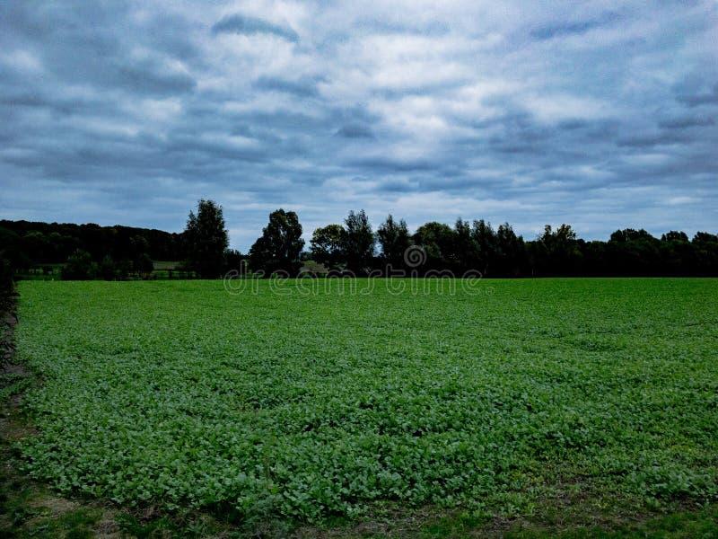 Campo verde con il cielo nuvoloso blu ed alberi nel fondo fotografia stock libera da diritti