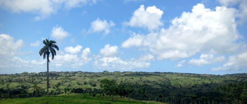 Campo verde con la palmera imagen de archivo libre de regalías