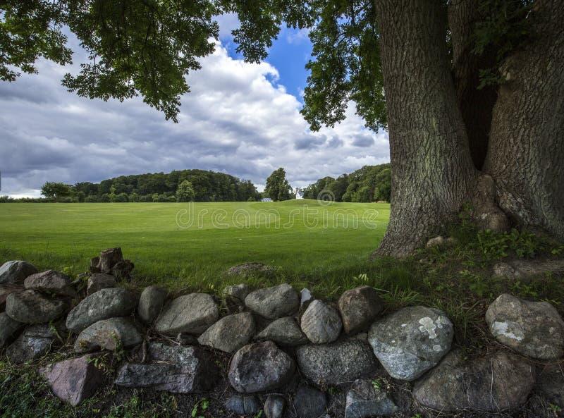 Campo verde con una pared de piedra y un árbol tres-provenido imagen de archivo libre de regalías