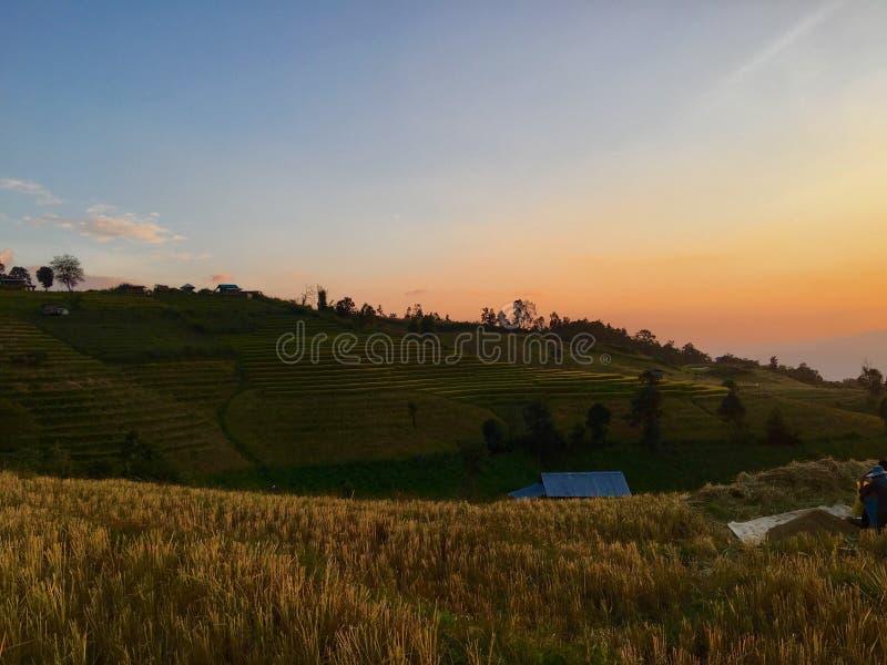 Campo verde del arroz fotografía de archivo