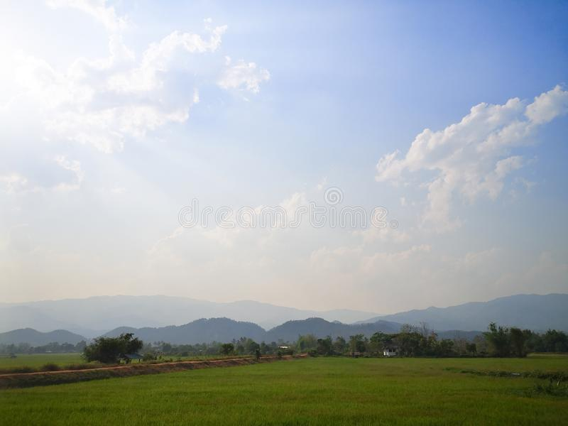 Campo verde del arroz, cielo azul de la hierba verde imágenes de archivo libres de regalías