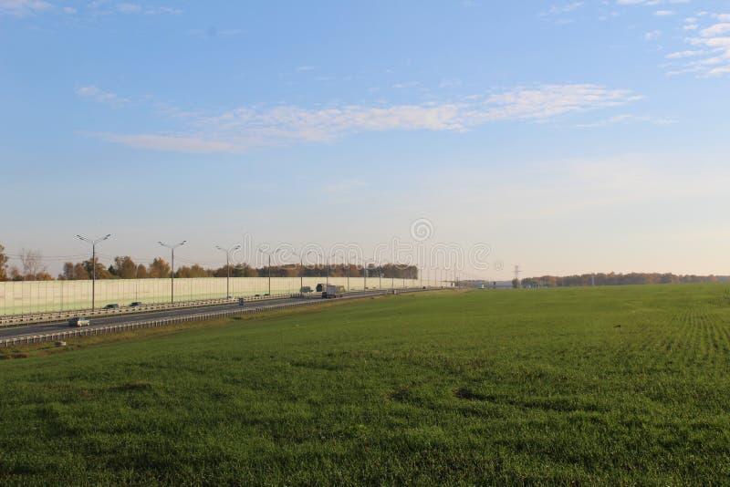 Campo verde delle piantine fotografia stock libera da diritti