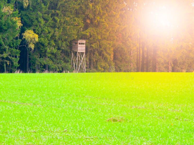 Campo verde di autunno e sedile della guardiacaccia di legno anziana alto alla foresta fotografie stock libere da diritti
