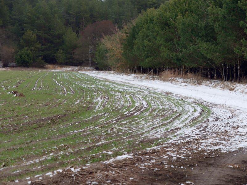 Campo verde di inverno innevato la terra immagini stock libere da diritti