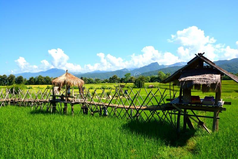 Campo verde do arroz com cabana tailandesa foto de stock