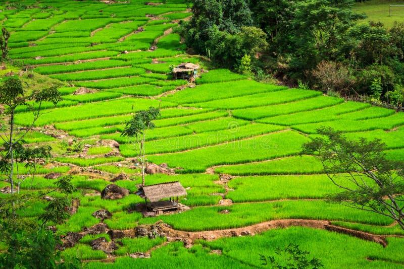 Campo verde do arroz dos terraços, uma beleza natural bonita na montanha em Nan, Khun Nan Rice Terraces, Boklua Nan Province, Tai fotografia de stock royalty free