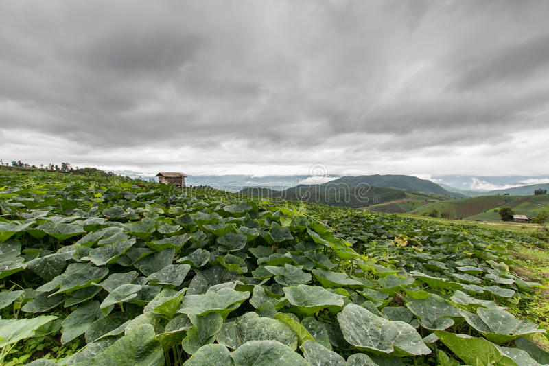 Campo verde do arroz em Pa Pong Pieng, Mae Chaem, Chiang Mai, Tailândia fotos de stock royalty free