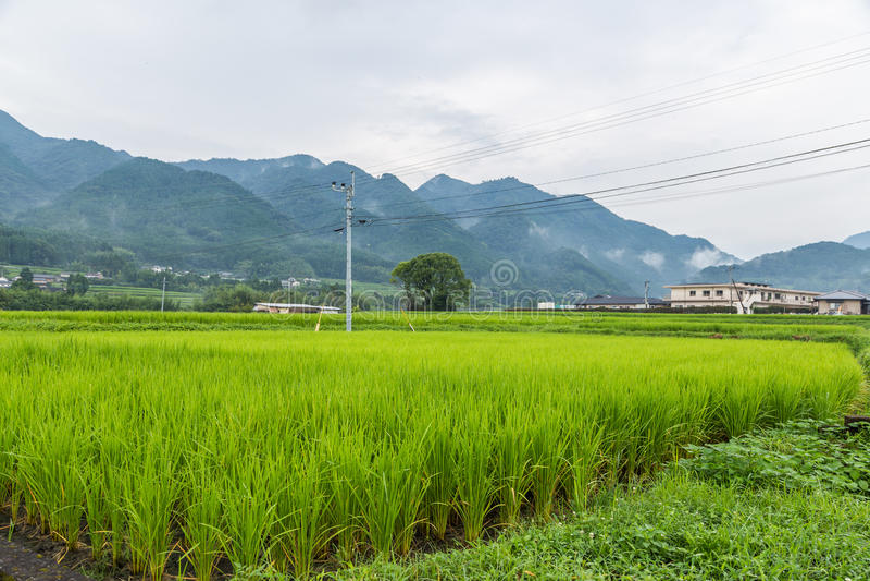 Campo verde do arroz em rural de Yufuin, Oita, Japão fotos de stock royalty free