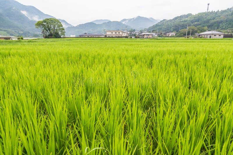 Campo verde do arroz em rural de Yufuin, Oita, Japão foto de stock royalty free