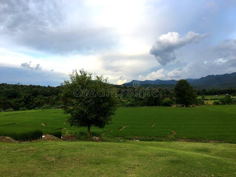Campo verde do arroz do terraço na frente da montanha sob a nuvem e o céu escuros foto de stock royalty free