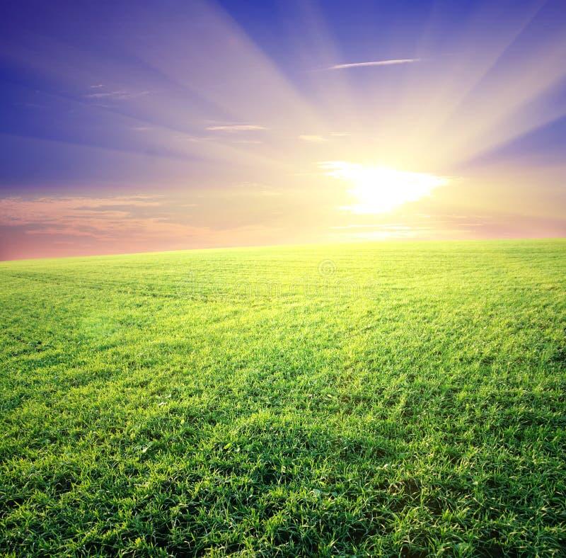 Campo verde e bello tramonto immagine stock libera da diritti