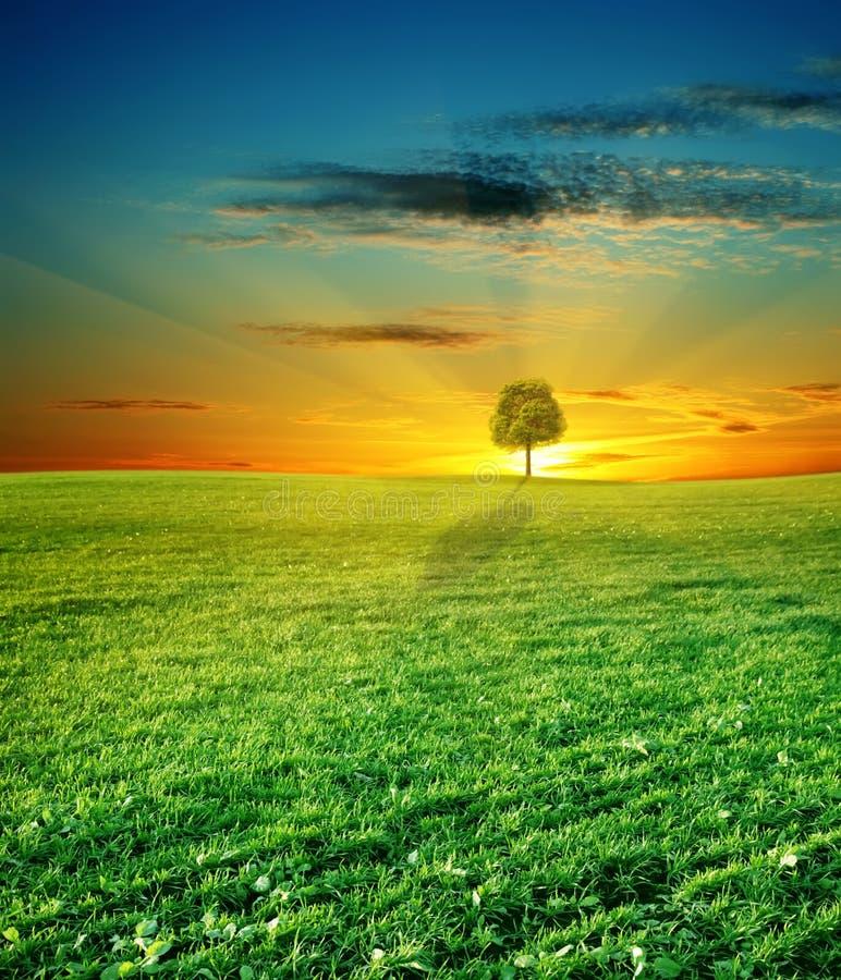 Campo verde e bello tramonto fotografie stock
