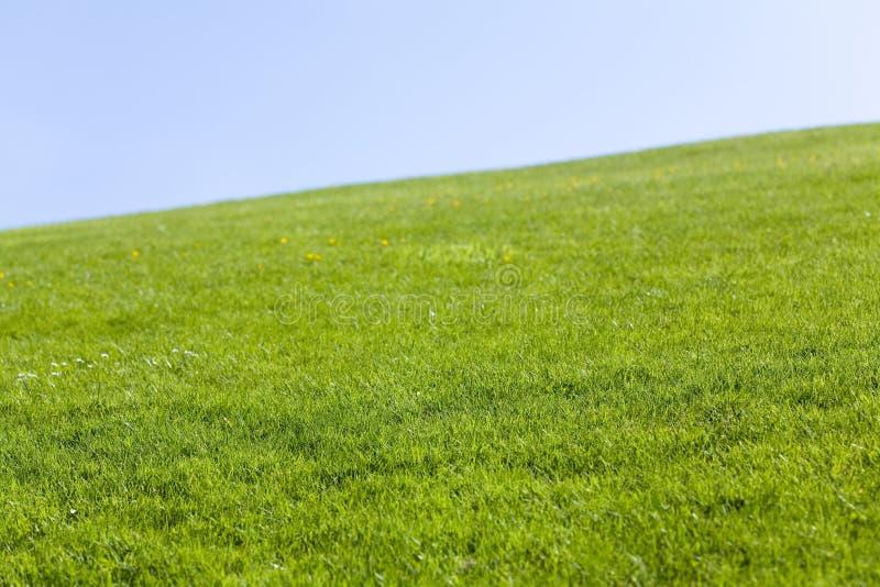 Campo verde e céu azul foto de stock royalty free