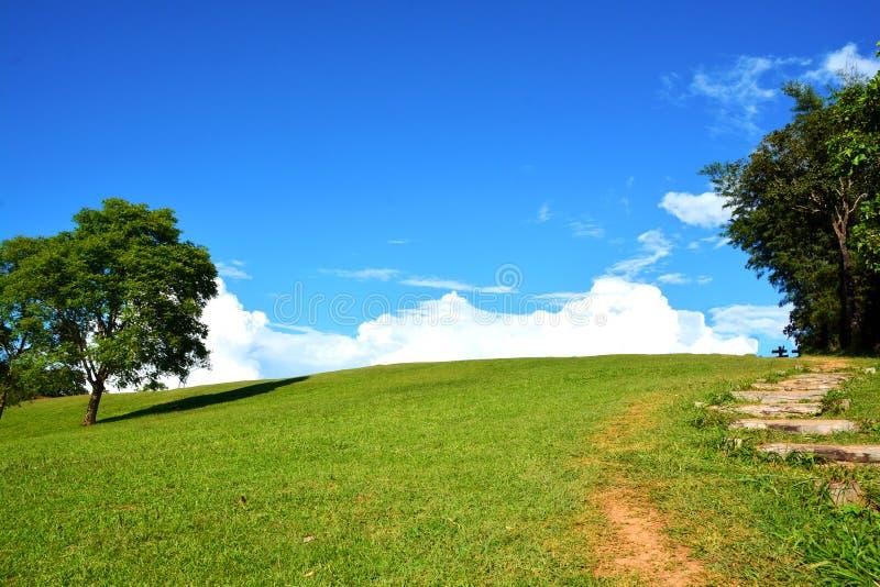 Campo verde e céu azul imagem de stock