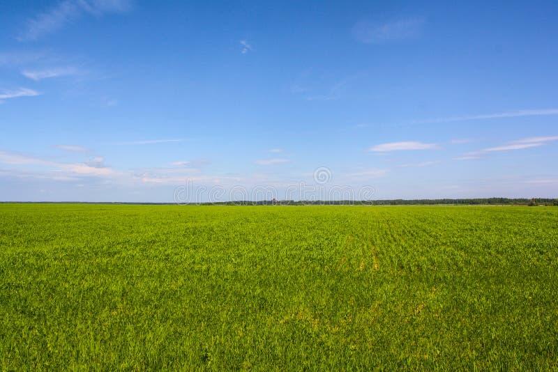 Campo verde e c?u azul fotografia de stock royalty free