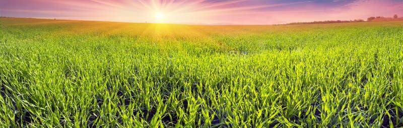 Campo verde fresco fotografia stock