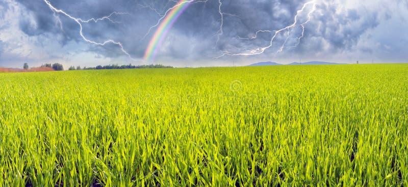 Campo verde fresco immagine stock libera da diritti