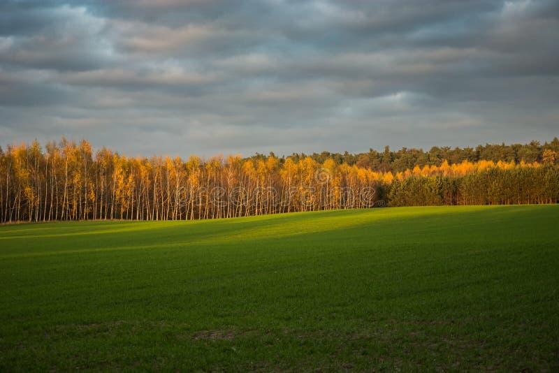 Campo verde grande, bosque del otoño y nubes anaranjados en el cielo imagen de archivo