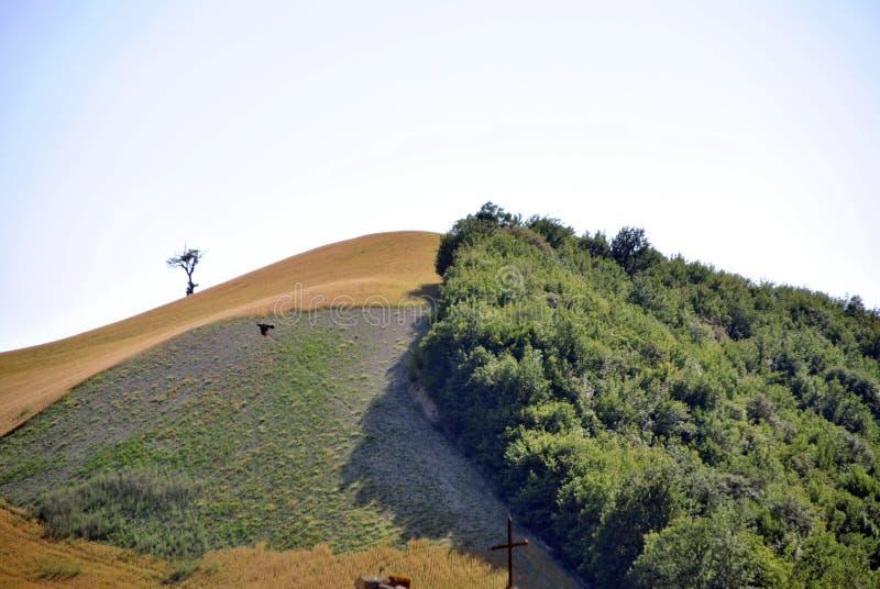 Campo verde italiano en Italia fotografía de archivo