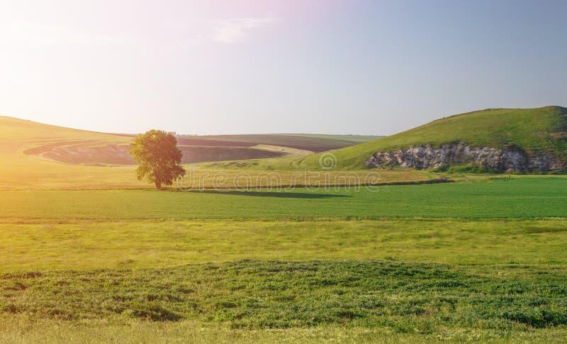Campo verde no por do sol foto de stock royalty free