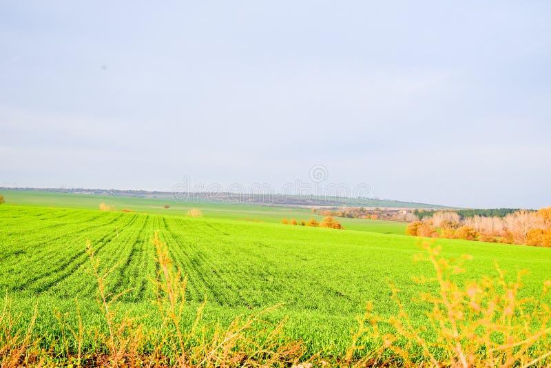 Campo verde, paisaje del autumnd imagenes de archivo