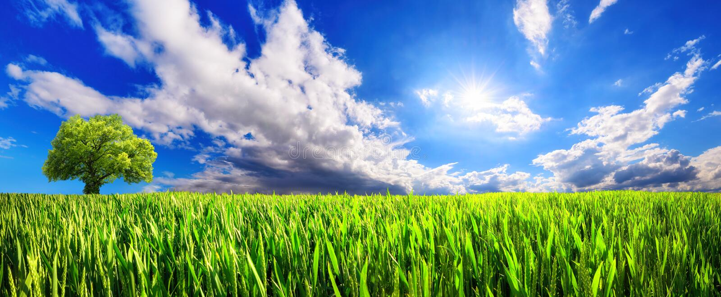 Campo verde panorámico con el cloudscape dinámico foto de archivo libre de regalías